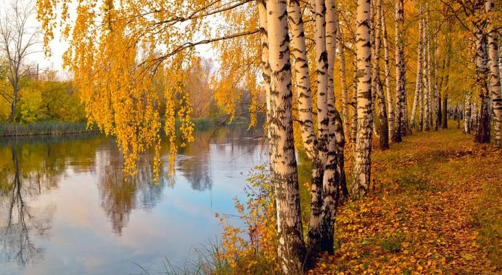 Синоптики рассказали, останется ли тепло в Коми на выходных