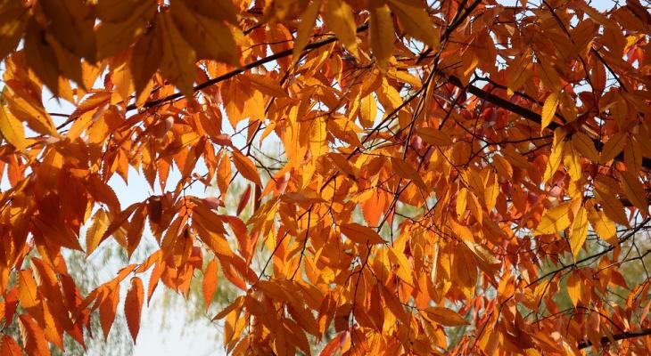 Погода в Сыктывкаре 8 сентября: снова осень