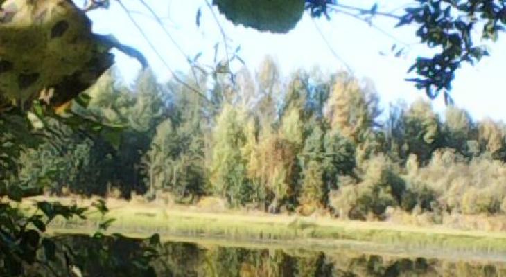 Фото дня в Сыктывкаре: тихая река и увядающий осенний лес