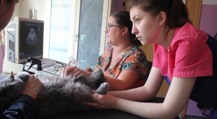 Сыктывкарские дети издевались над кошкой: у нее смяты все органы