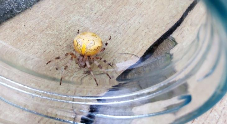 Сыктывкарка нашла на даче странного паука: «Не видела никогда такого»