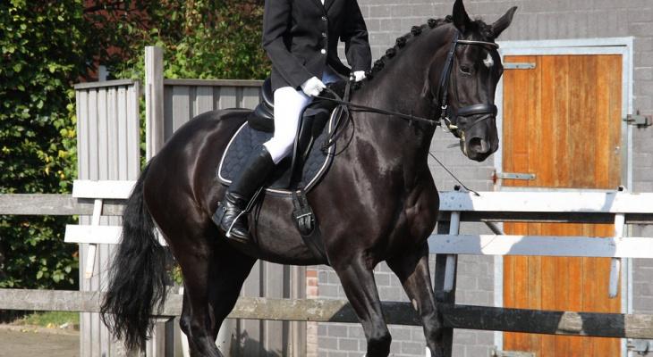 Девушка из Коми дважды победила на всероссийских соревнованиях по конному спорту