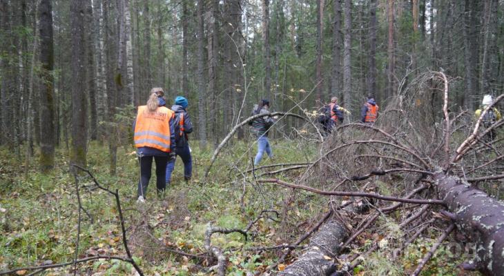 В Сыктывкаре волонтеры «искали» в лесу за Динамо пропавших людей (фото)