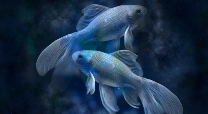 Гороскоп на 24 сентября: Рыб ждут причуды самочувствия, а Овны потратят деньги