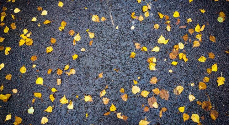 Фото дня в Сыктывкаре: золотые листья на черном холсте асфальта
