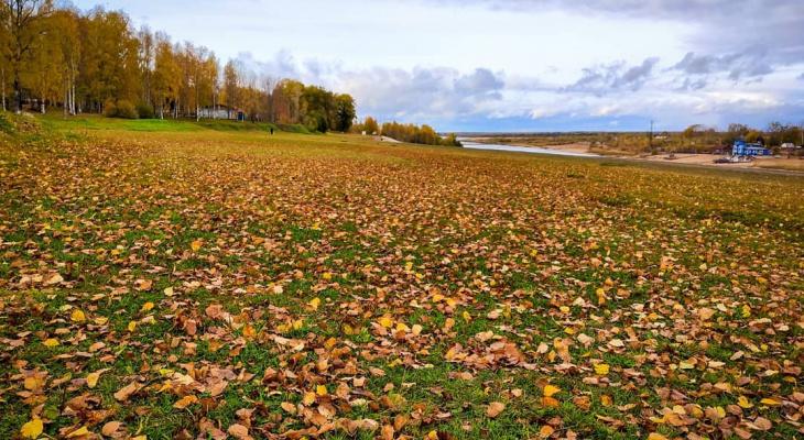 Фото дня в Сыктывкаре: тысячи золотых листьев на городской набережной
