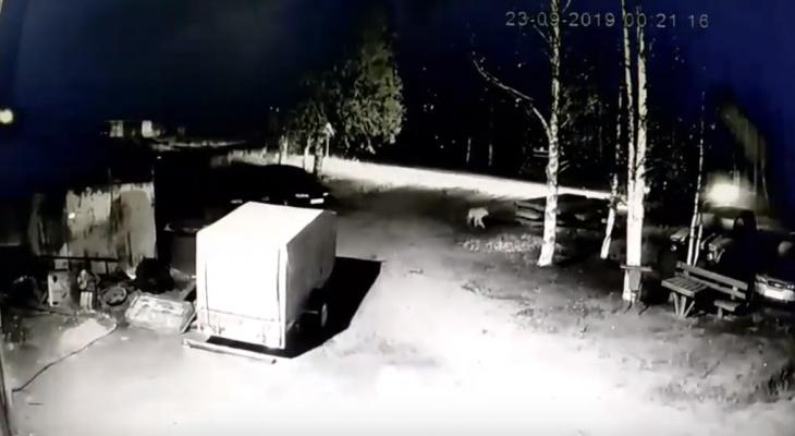 В Коми возле дома детского творчества рыщут волки (видео)