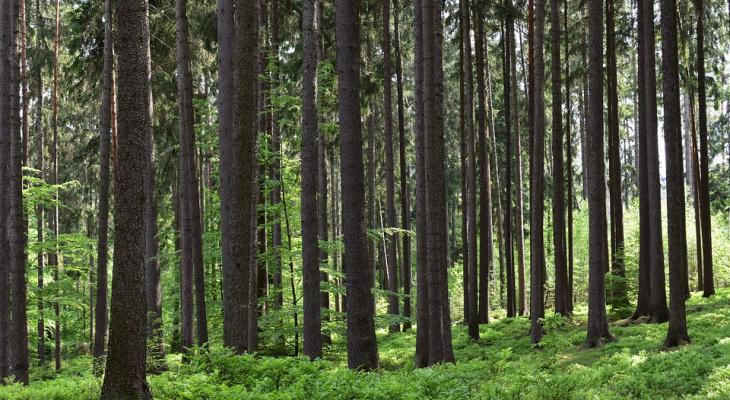 В Коми третий день ищут женщину, которая заблудилась в лесу