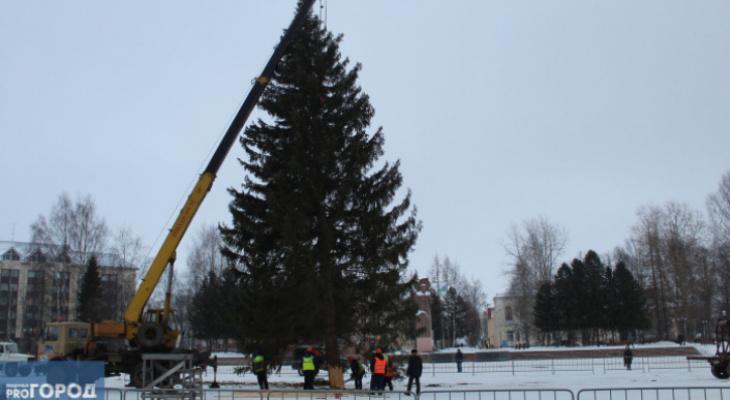 Стало известно, когда в Сыктывкар привезут главную новогоднюю елку