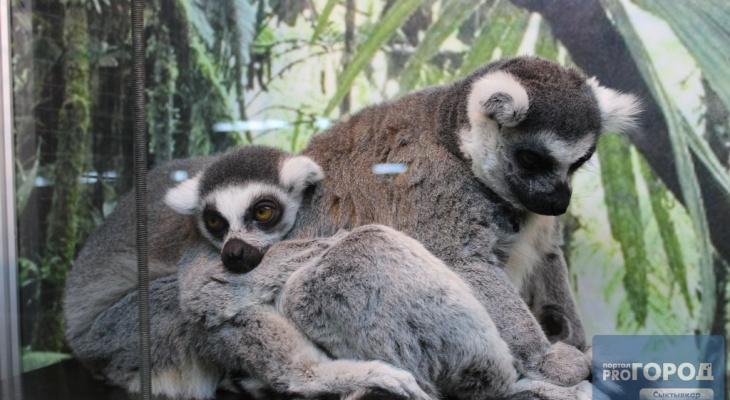 Стало известно, когда запретят контактные зоопарки в России