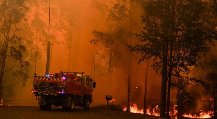 Сыктывкарец пытается уехать в охваченную пламенем Австралию, чтобы спасать коал