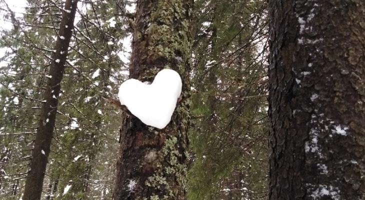 Фото дня в Сыктывкаре: кусочек тепла и любви от холодной зимы