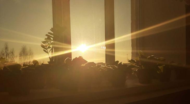 Фото дня в Сыктывкаре: домашний сад в лучах утреннего солнца