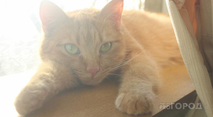 «Они очень ждут ласки»: волонтеры рассказали о жизни котов в сыктывкарском приюте (фото)