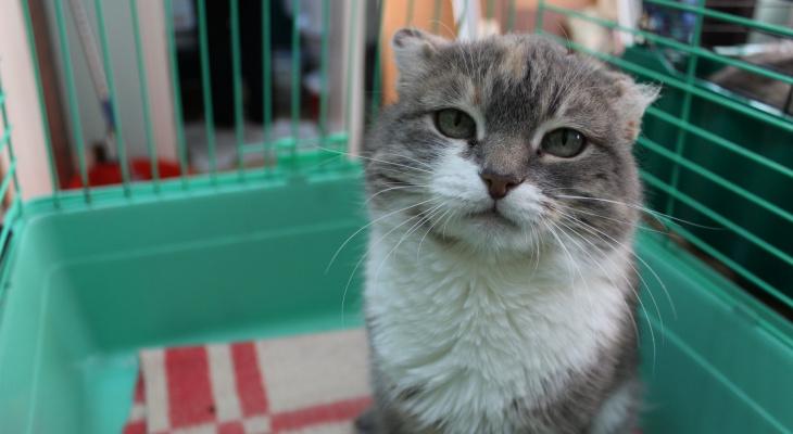Милый уголек, задумчивая Марфа и яркая Клякса: животные из приюта ищут новый дом в Сыктывкаре