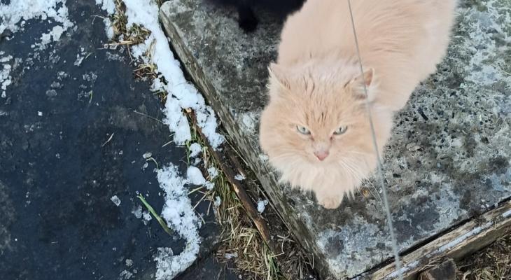 Сыктывкарка: «Изверги сожгли моего кота»