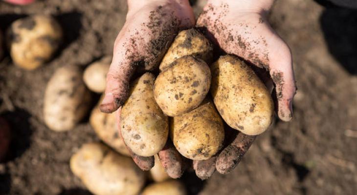 Малоимущим жителям Коми выделят 500 рублей на посадку картошки