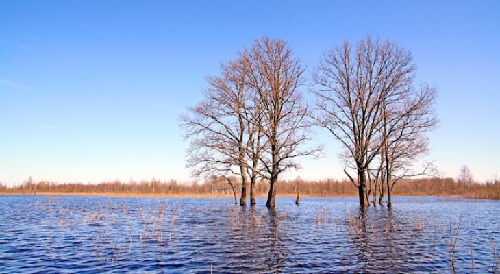 Синоптики назвали причину аномальной погоды в Коми