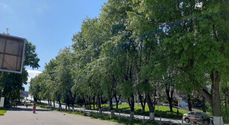Сыктывкарцам предложили решить судьбу деревьев у легендарного «Биг Бена»