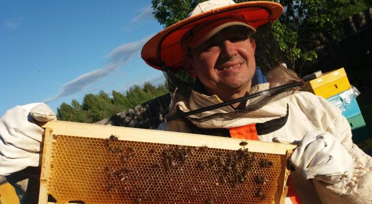 Как сыктывкарцам выбрать натуральный мед: рассказал пчеловод с 12-летним стажем