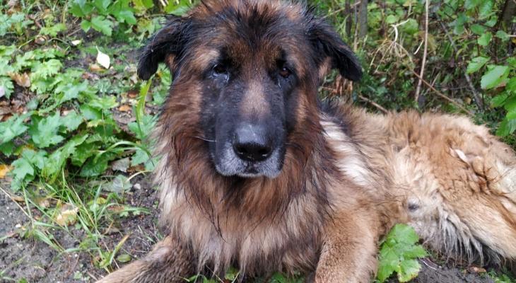 Восставший из могилы пес из Коми нашел новых хозяев