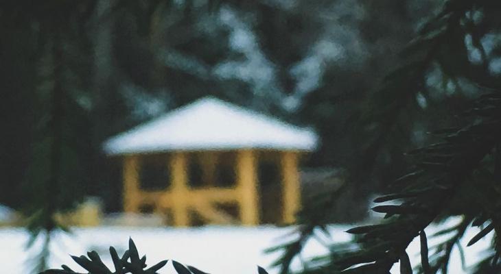 Фото дня в Сыктывкаре: беседка в лесу