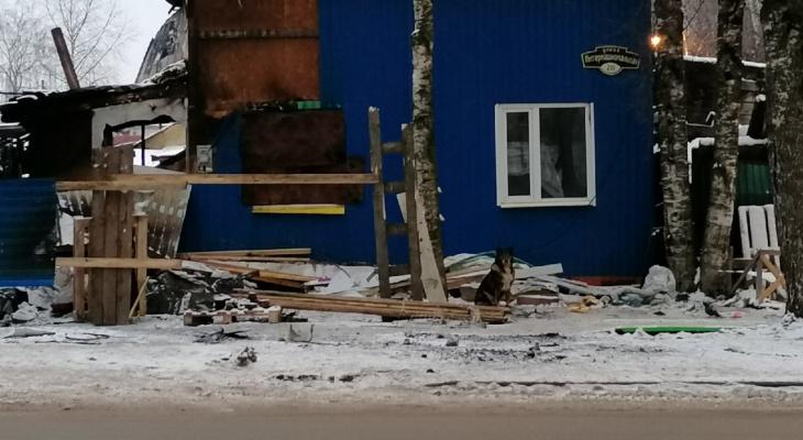 Собака сыктывкарца, который погиб в пожаре, все еще на улице