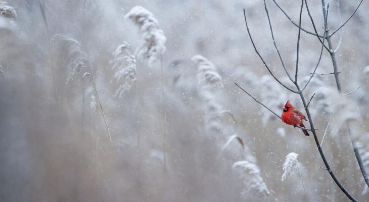 Синоптики дали воодушевляющий прогноз на вторую неделю декабря в Коми