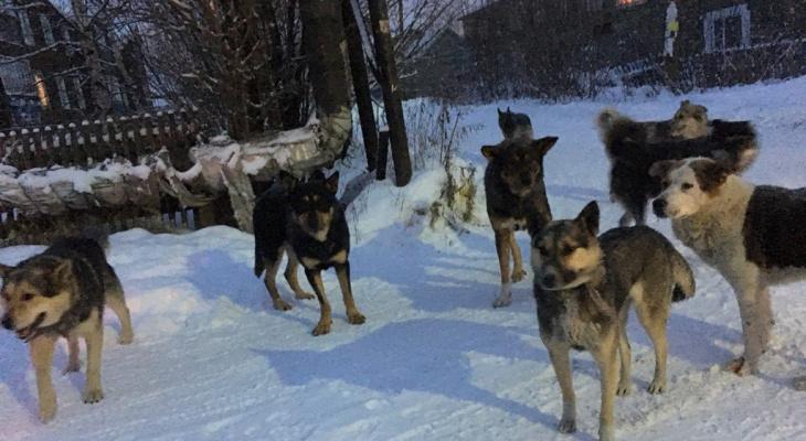 После нападения собак общественники подали заявление в прокуратуру на мэра Ухты