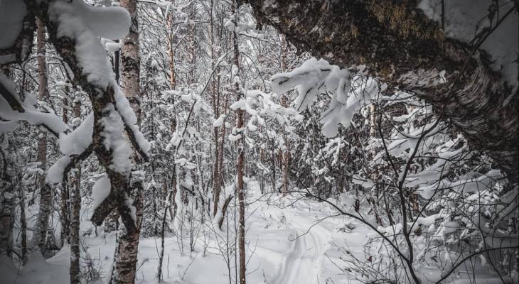 Новая зацепка: в лесу обнаружились варежки пропавшей ухтинки