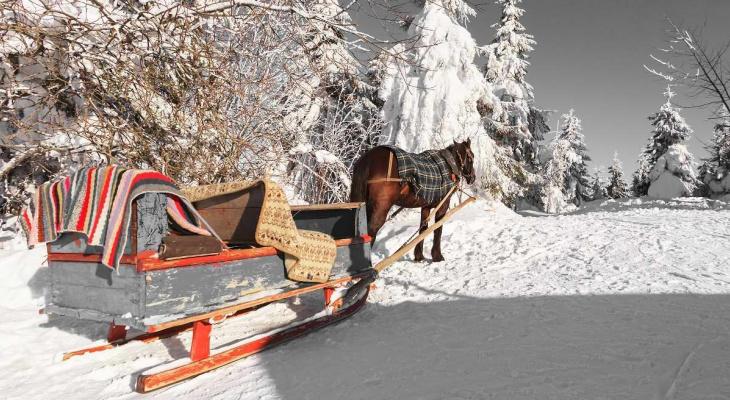 Житель Коми поехал покупать лошадь и бесследно исчез