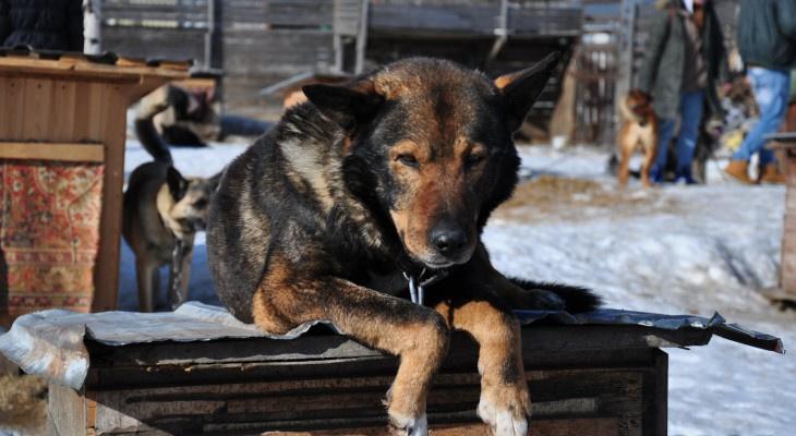 В Коми проверили животных на наличие особо опасных болезней