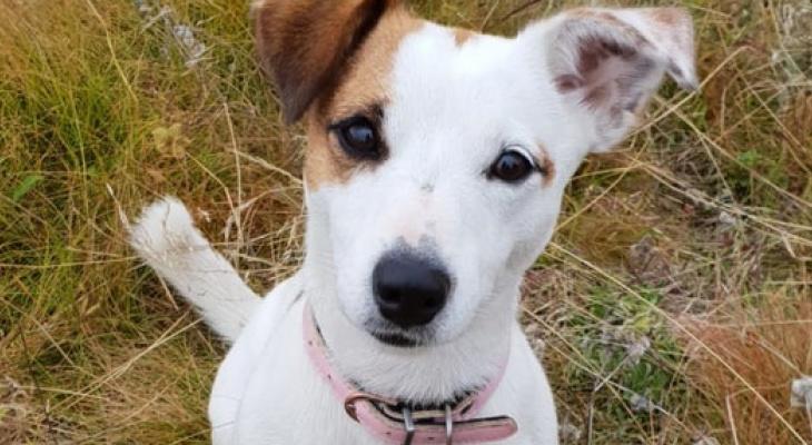 Собаку, которая в Коми спасла мальчика от волка ценой своей жизни, номинировали на международную премию