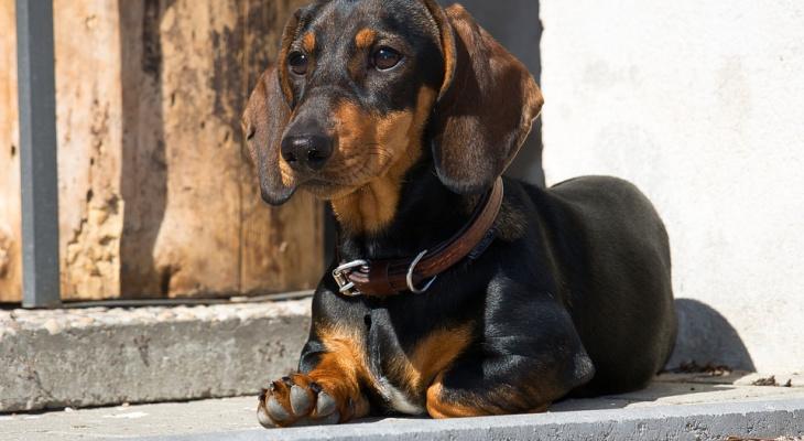 Ученые увидели в собачьих «газах» угрозу для человечества