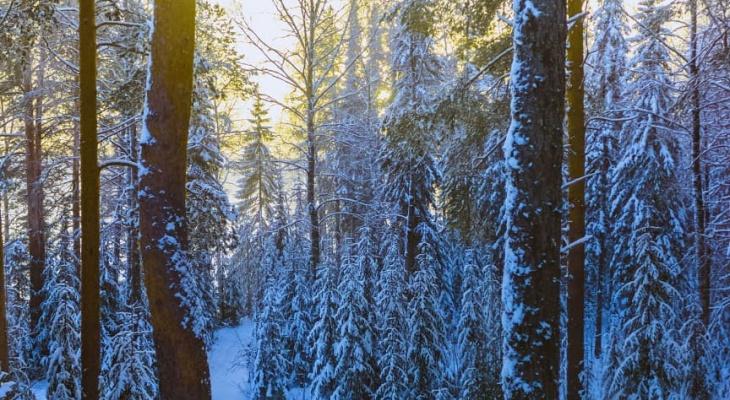 В Сыктывкаре обнаружили вмерзшее в снег тело человека