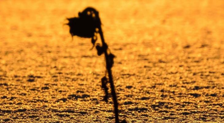 Фото дня в Сыктывкаре: цветок заката