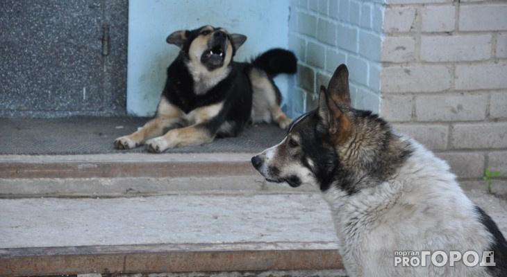 Госдума поддержала часть предложений Коми по поводу обращения с бездомными животными