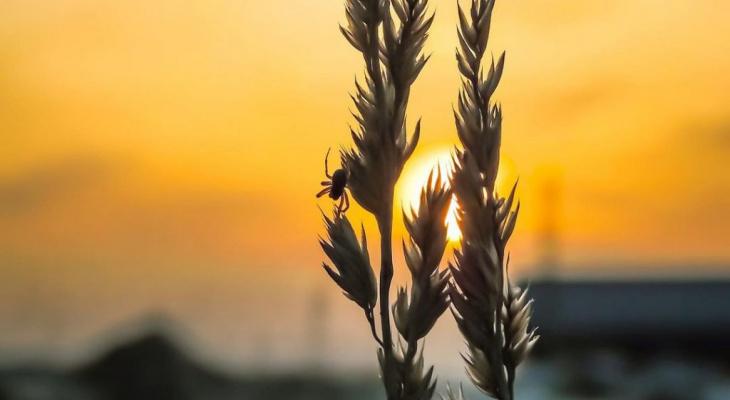 Фото дня в Сыктывкаре: теплая атмосфера весенних закатов