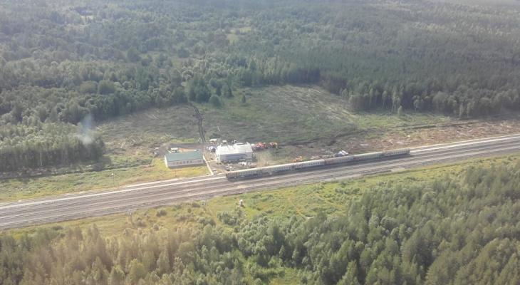 На станции Шиес высадят почти 40 тысяч сосен
