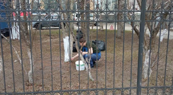 В Сыктывкаре белят деревья, несмотря на запрет Совета города и федеральные законы