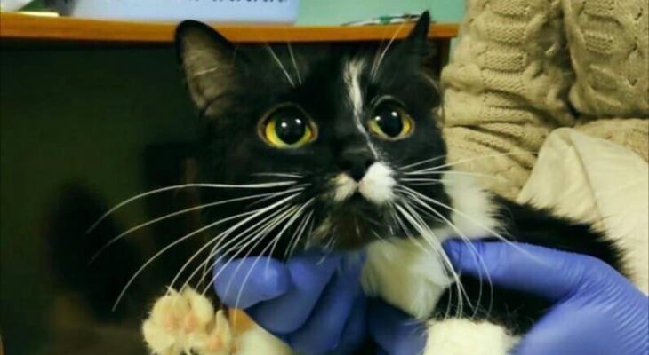Сыктывкарка, которую обвиняют в убийстве кошки, озвучила свою версию событий