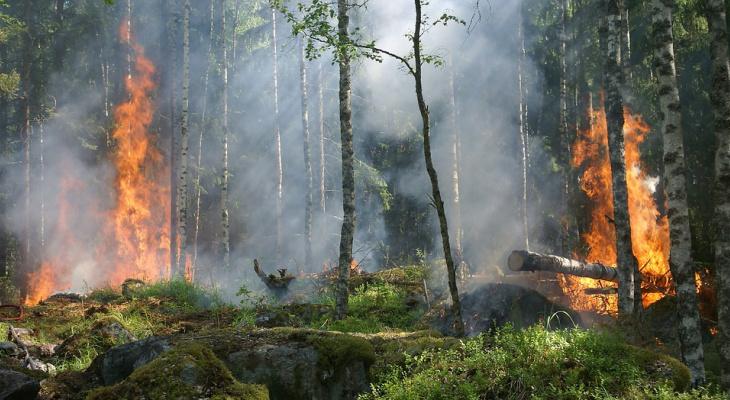 В Коми прошло заседание по ликвидации чрезвычайных ситуаций и пожарной безопасности