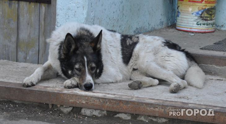 В Коми бездомная собака покусала ребенка