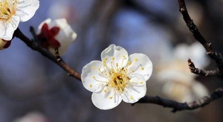 Коми зальет дождем: синоптики дали прогноз на май