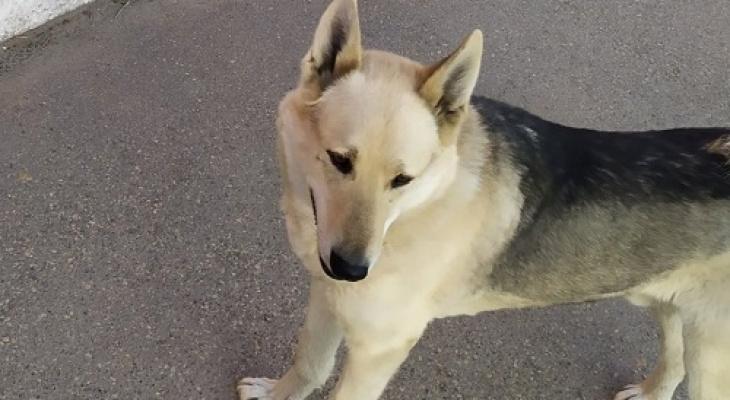 Сыктывкарцы просят провести прокурорскую проверку после жестокого убийства собаки
