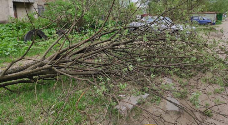 На сыктывкарца с коляской упало дерево