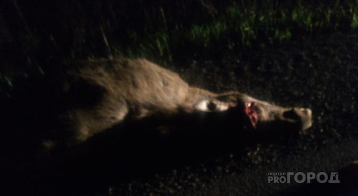 В Коми лось выбежал под машину, травмировал четырех человек и погиб