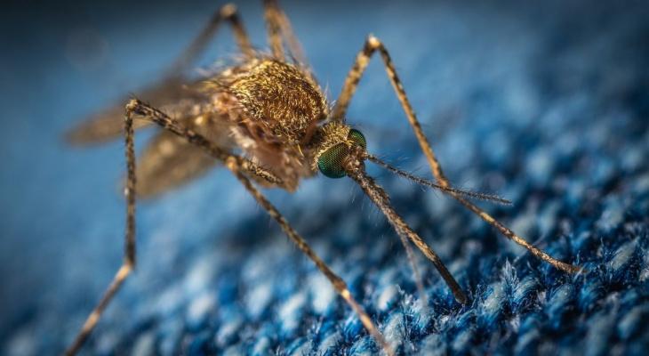Лето без комаров: летучих кровопийц в Коми будет мало