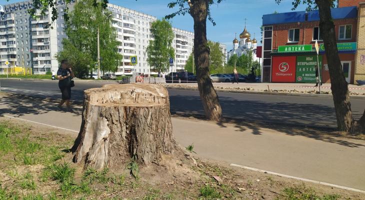 «Трон для Путина» или избирательный участок: сыктывкарцам предложили сделать из пня арт-объект