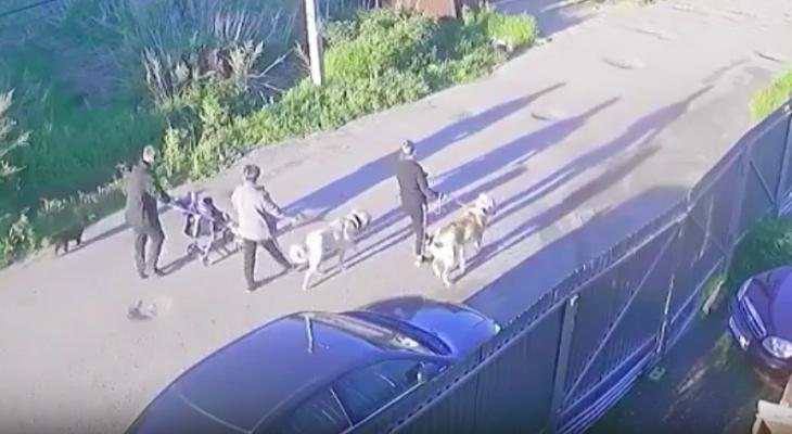 Сыктывкарцы: «Они натравили огромных собак на дворняжку»